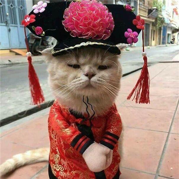 Hết bán cá lại trông phản thịt, chú mèo nổi tiếng khắp chợ Hải Phòng lên trang nhất tạp chí nước ngoài - Ảnh 13.