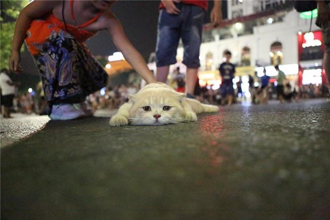Hết bán cá lại trông phản thịt, chú mèo nổi tiếng khắp chợ Hải Phòng lên trang nhất tạp chí nước ngoài - Ảnh 16.