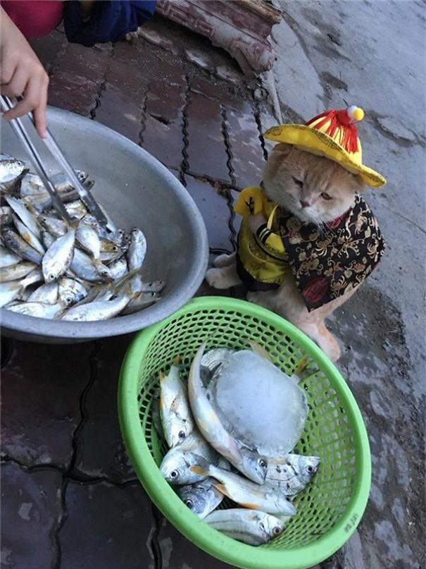 Hết bán cá lại trông phản thịt, chú mèo nổi tiếng khắp chợ Hải Phòng lên trang nhất tạp chí nước ngoài - Ảnh 19.