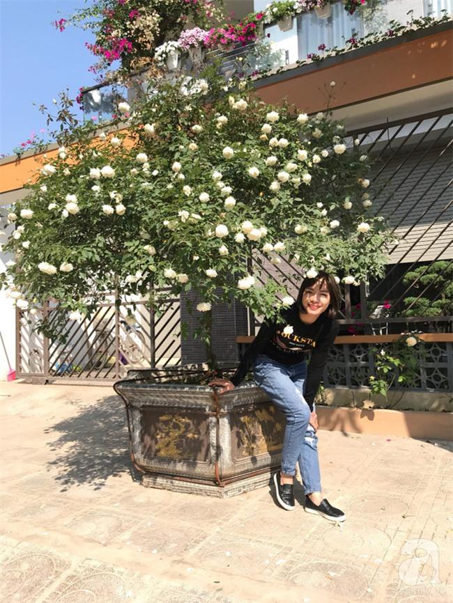 Ngày 8/3 cùng ngắm cây hồng bạch nở hàng trăm bông của người phụ nữ dành trọn niềm đam mê cho hoa ở Thái Nguyên - Ảnh 1.
