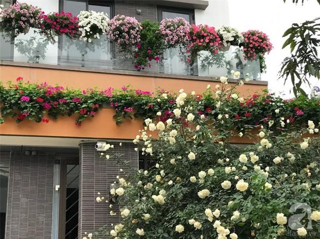 Ngày 8/3 cùng ngắm cây hồng bạch nở hàng trăm bông của người phụ nữ dành trọn niềm đam mê cho hoa ở Thái Nguyên - Ảnh 6.
