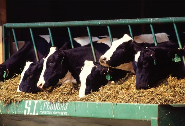 Chuyên gia giải thích sữa bò có thực sự là nguyên nhân gây ung thư?-2