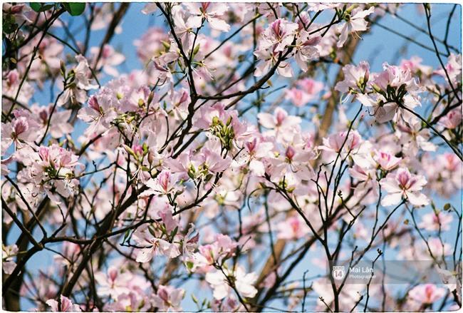 Chùm ảnh: Đây là Hà Nội, của những ngày trắng muốt hoa sưa... - Ảnh 10.