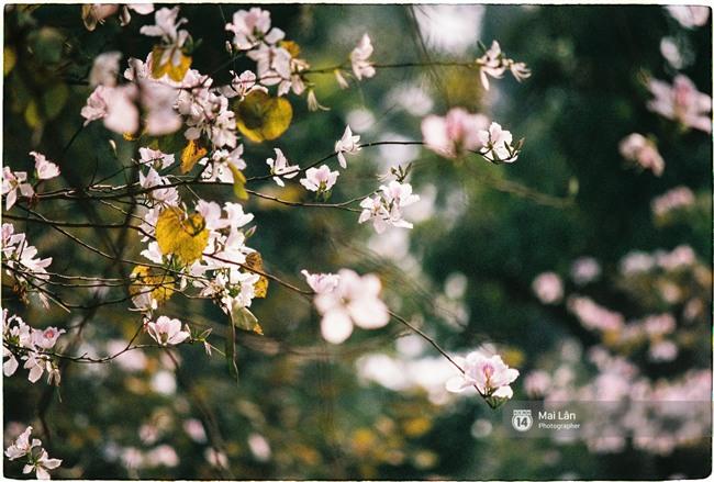Chùm ảnh: Đây là Hà Nội, của những ngày trắng muốt hoa sưa... - Ảnh 12.