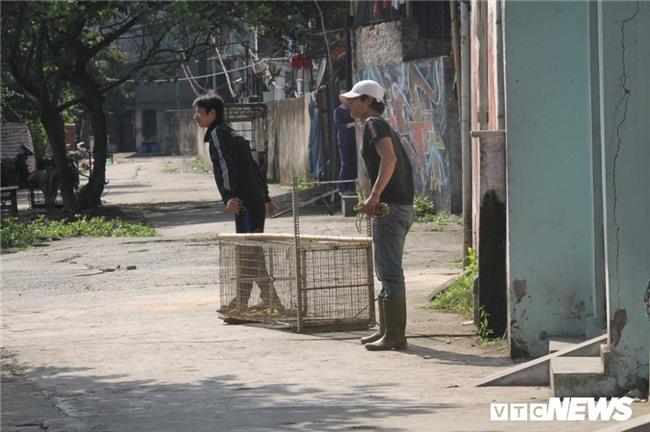 Nguồn gốc hai con khỉ hoang đang đại náo tổ dân phố ở Hà Nội - Ảnh 3.