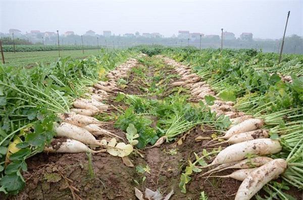 nông sản rớt giá