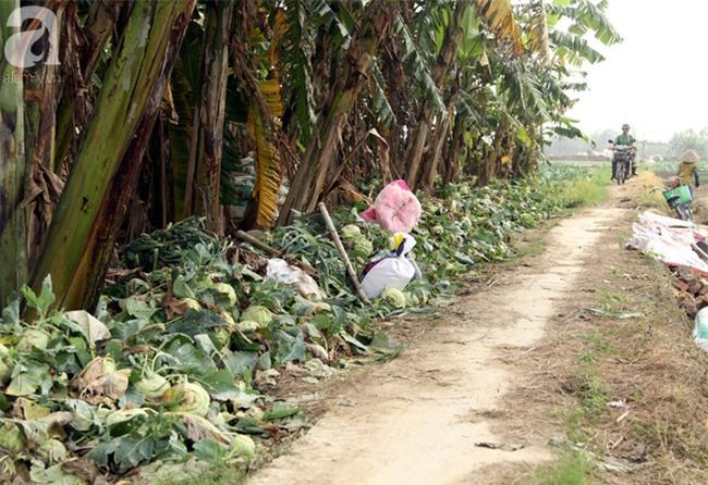 Hết củ cải Mê Linh, nông dân Hải Dương rớt nước mắt vứt hàng tấn su hào ven đường - Ảnh 1.
