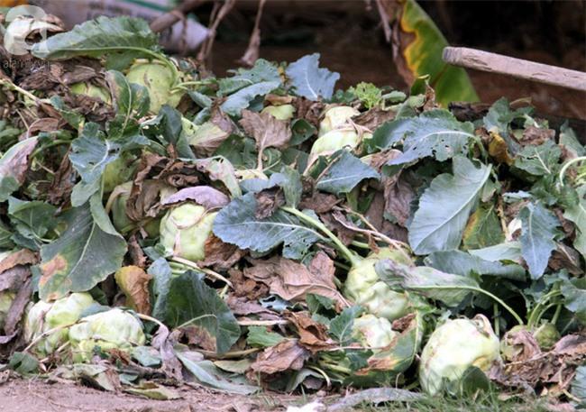 Hết củ cải Mê Linh, nông dân Hải Dương rớt nước mắt vứt hàng tấn su hào ven đường - Ảnh 12.