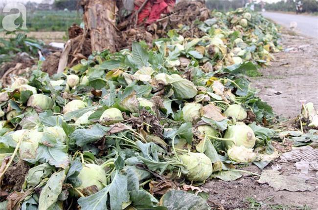 Hết củ cải Mê Linh, nông dân Hải Dương rớt nước mắt vứt hàng tấn su hào ven đường - Ảnh 8.