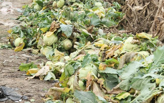 Hết củ cải Mê Linh, nông dân Hải Dương rớt nước mắt vứt hàng tấn su hào ven đường - Ảnh 9.