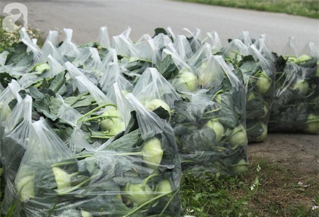 Hết củ cải Mê Linh, nông dân Hải Dương rớt nước mắt vứt hàng tấn su hào ven đường - Ảnh 14.