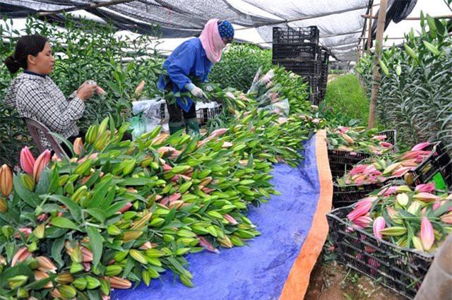 nông sản việt,nông sản giảm giá