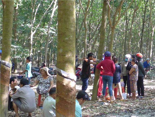 Nghi phạm hiếp dâm rồi sát hại bé gái 4 tuổi ở Bình Phước từng được gia đình nạn nhân cưu mang, cho ở nhờ 7 năm không lấy tiền - Ảnh 4.