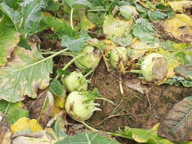 nông sản việt,nông sản giảm giá,bộ NN-PTNT