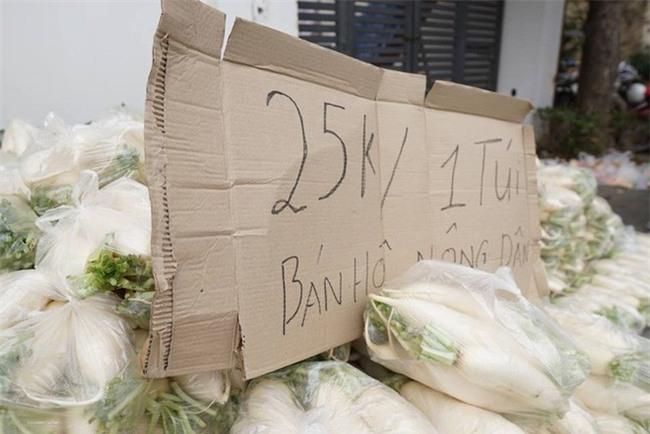 Hàng trăm người dân Hà Nội háo hức giải cứu củ cải trắng cho nông dân Tráng Việt - Ảnh 3.