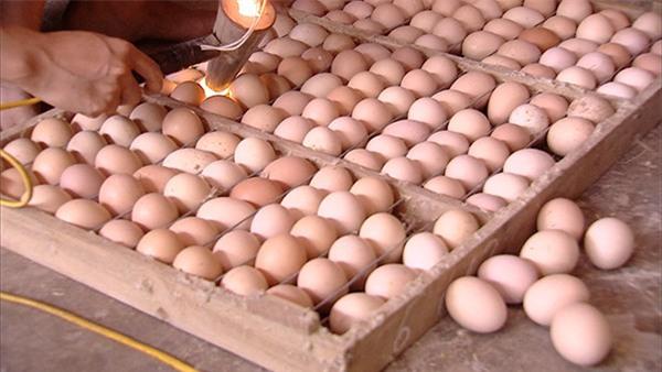 Đua nhau ăn trứng ấp dở để bồi bổ cơ thể, chữa khỏi đau đầu: Chuyên gia khẳng định phản khoa học, nguy hại sức khỏe - Ảnh 3.
