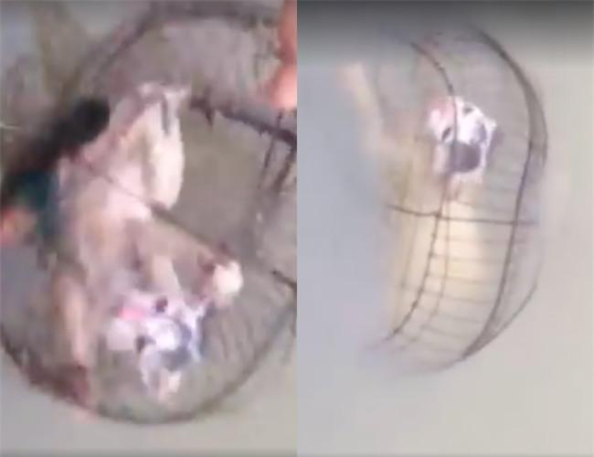 Nam thanh niên nhốt mèo vào lồng, dìm xuống ao cho đến chết rồi làm thịt gây phẫn nộ - Ảnh 2.