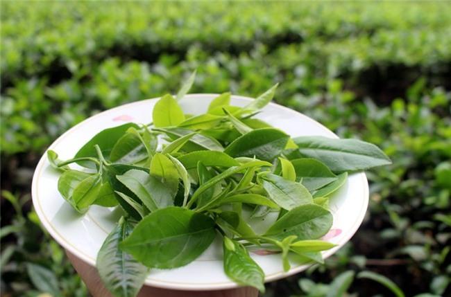 matcha,trà xanh,khởi nghiệp,Thái Nguyên,chàng trai 9X