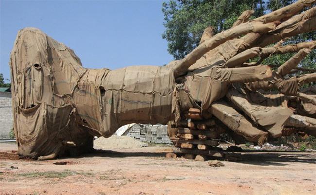 Xuất hiện người tự xưng là chủ nhân của 3 cây khổng lồ bị CSGT bắt giữ
