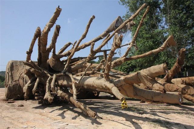 Xuất hiện người tự xưng là chủ nhân của 3 cây khổng lồ bị CSGT bắt giữ - Ảnh 1.