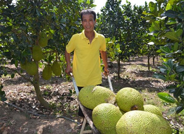 nông sản tăng giá,mít thái,thương lái trung quốc