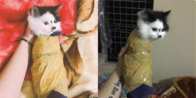 Bị dân mạng phẫn nộ vì hành hạ mèo bằng cuộn băng dính, người chủ lên tiếng  - Ảnh 2.