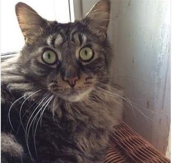 Nếu thoạt nhìn, có thể bạn sẽ thấy chú mèo có tận 4 mắt