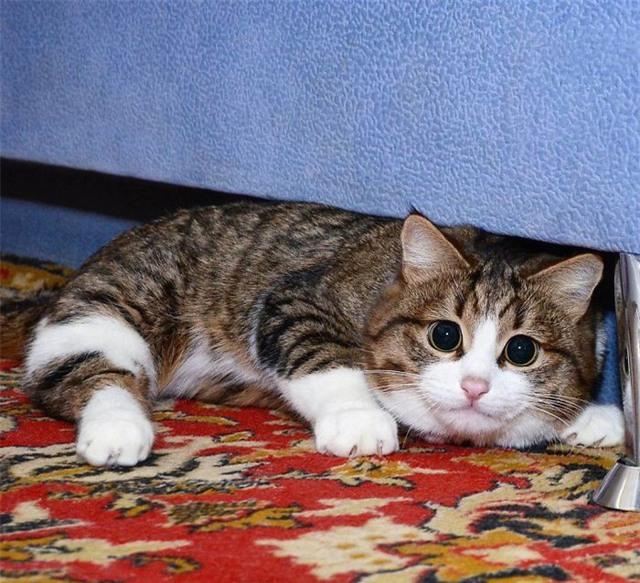 Nhưng lúc cần, Rexie có thể sẵn sàng đóng vai mèo ngoan như thế này.