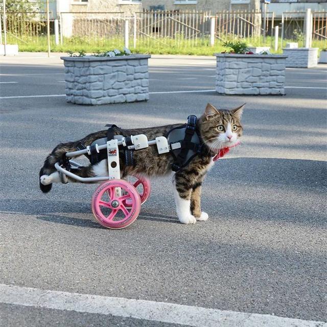 Ban đầu, Rexie phải di chuyển với một thiết bị thế này.