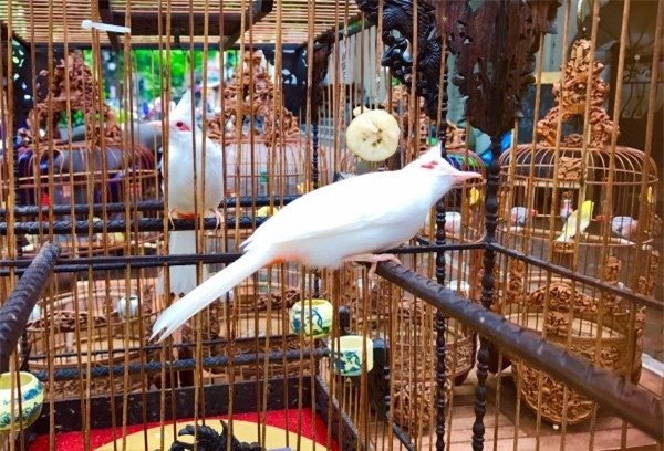 chim cảnh,thú chơi,đại gia Việt