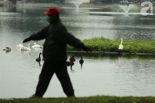 Một cá thể Thiên Nga được thả tại hồ Thiền Quang bị mất tích nhiều ngày qua - Ảnh 6.