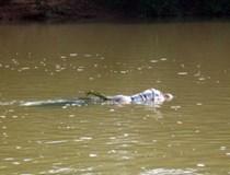 Xác cô gái trẻ trôi trên sông Phủ