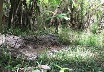 Kinh hoàng con giết mẹ tàn tật, chôn xác ngoài vườn