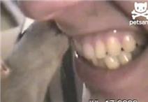 Đánh răng bằng... chuột