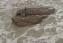 Video: Xuất hiện sinh vật lạ có đuôi được cho là Người cá