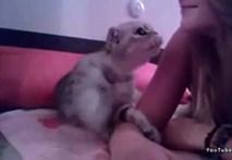 Ngộ nghĩnh chú mèo âu yếm hôn cô chủ