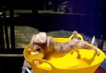 Phản ứng trái ngược của chó khi tắm