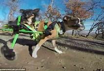 Video : Chó chỉ có hai chân chạy nhanh như... ngựa