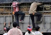 Thực hư chuyện hôi dưa ở Lạng Sơn gây xôn xao dư luận