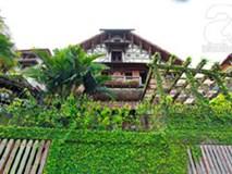 Ngày nóng ngắm những căn nhà phủ kín cây xanh mát mắt ở Hà Nội
