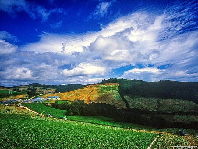 20. Gangneung Anbandeok-gil: Nhờ nằm khá gần Seoul (mất khoảng 3 tiếng đi xe), Gangneung ở tỉnh Gangwon là một trong những địa điểm du lịch đông khách quanh năm của Hàn Quốc.