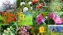 Ngây ngất ngắm 12 loài hoa ứng với 12 tháng của năm