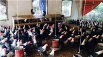 Trùm trứng gà Vĩnh Phúc: Đều đặn thu tiền tỷ