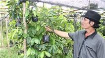 Lão nông thu hơn 1 tỷ mỗi năm nhờ sản xuất cây giống