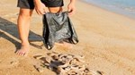 Lạ lùng loại nhân sâm biển càng xấu càng đắt, có giá tới 68 triệu đồng/kg-7