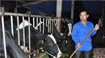 """""""Triệu phú"""" bò sữa xứ rau lập nghiệp từ hai bàn tay trắng"""