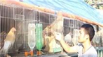 Bỏ ghế trưởng phòng, từ chối đi Úc về nuôi gà