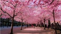 Đi du lịch Nhật Bản vào thời điểm nào là thích hợp nhất?