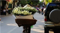 Thứ hoa này người Hà Nội mong ngóng nhất những ngày đầu đông