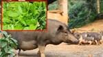 Bán thịt quê, rau sạch kiếm chục triệu mỗi tháng-3